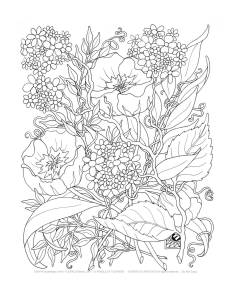 Adult-Coloring-Pages-10