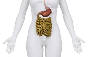 [Human gastrointestinal tract]