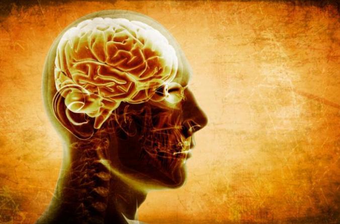 [The human brain]